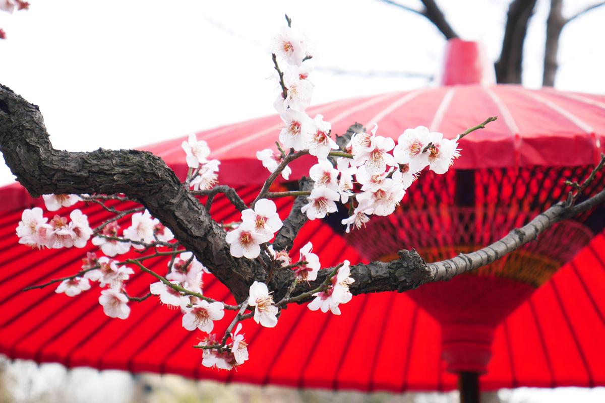 風趣に富んだ庭園で梅を愛でよう