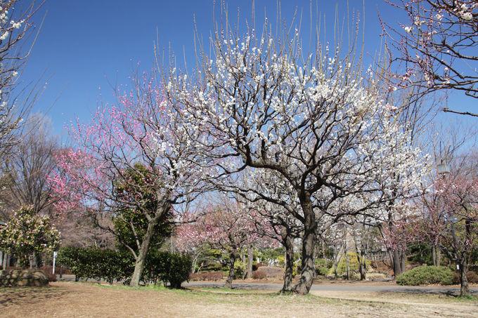 府中の森公園でのんびりと早春の公園散歩