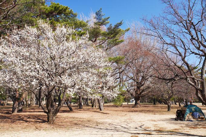 自然豊かな野川公園は早春のピクニックにも