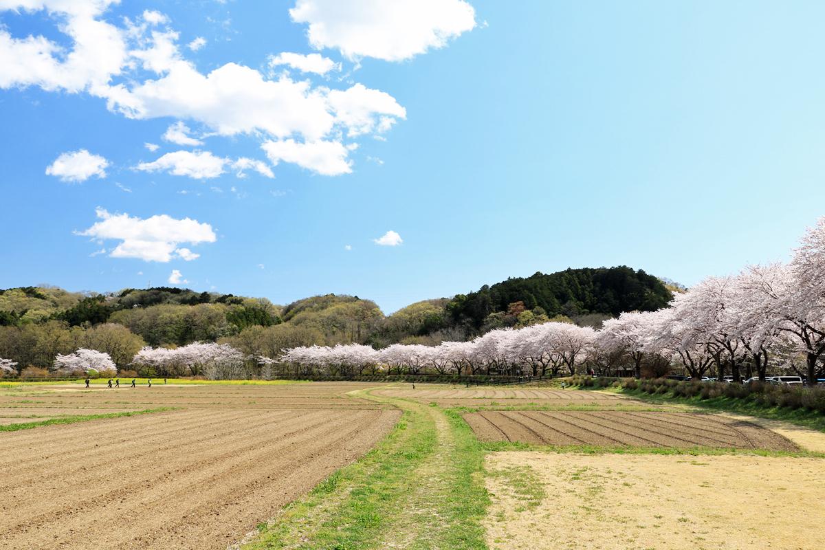 長閑な田園の春を楽しもう