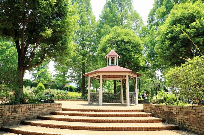 植物園のような相模原北公園、紫陽花の名所!