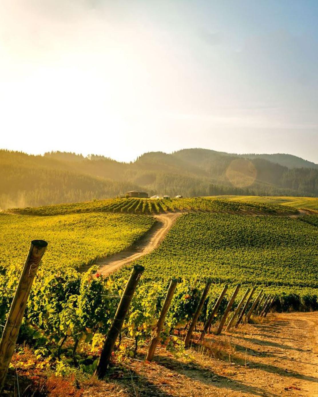 ワイン王国チリのワイナリーでワインを飲む