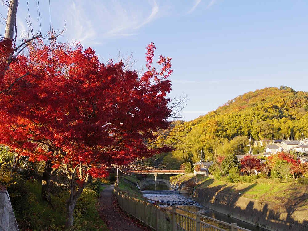 竜田川の紅葉の見頃は「11月下旬〜12月上旬」ごろ