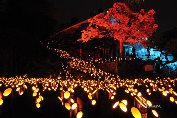 連なる光が描く幽玄な世界は圧巻の一言 十六羅漢像は必ず訪れたい!