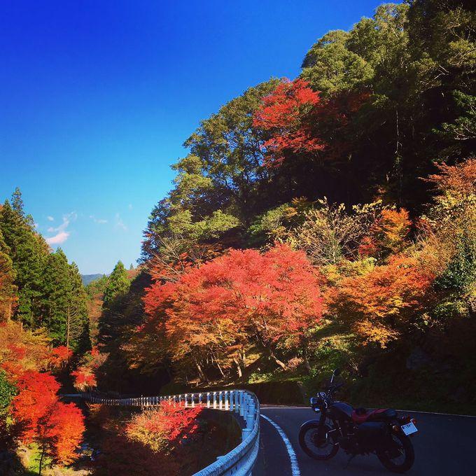 町長水ごりでPR、紅葉名所「長沢の滝」はNewパワースポット
