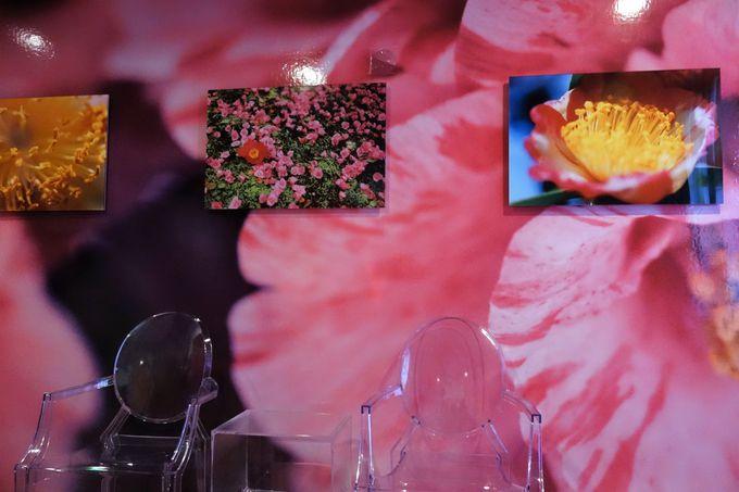 「TSUBAKI」 × 蜷川実花