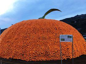 みかん2万個の巨大オブジェ出現!クリスマスオレンジのまち愛媛・八幡浜