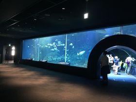 日本海を再現した水槽に注目!新潟市水族館「マリンピア日本海」