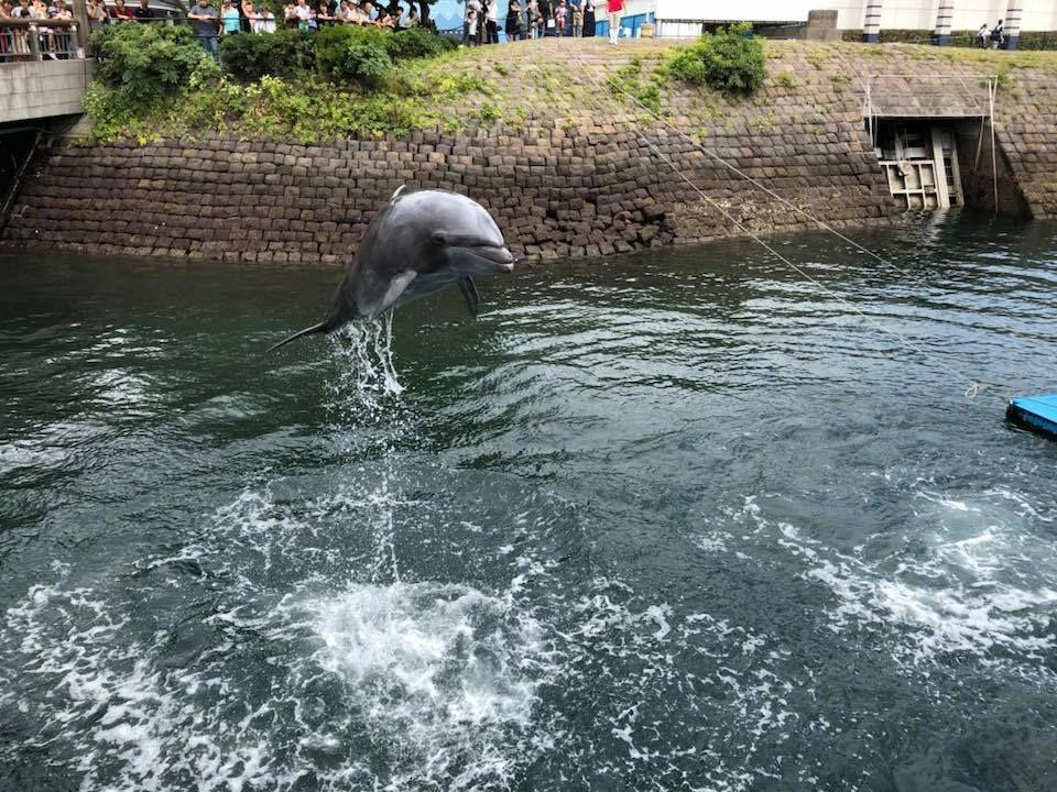無料でイルカショーを楽しめる「いおワールド かごしま水族館」