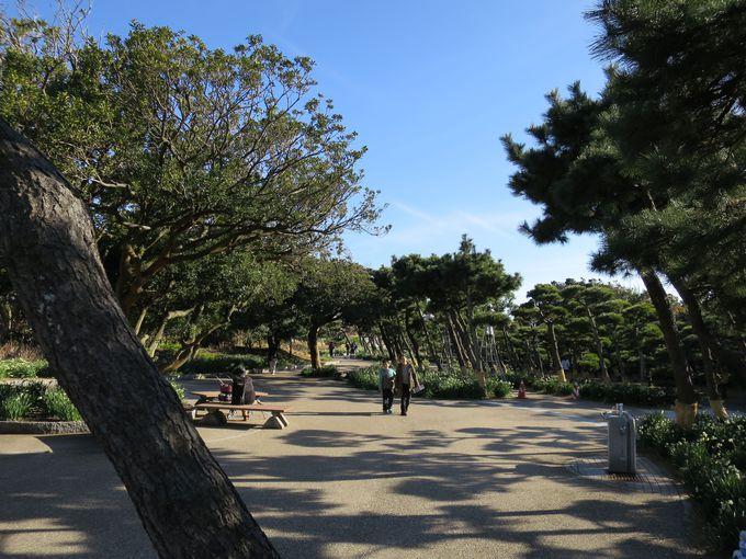 芝生が気持ちのいい広場と岩場に立つ安房埼灯台