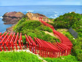 山口県・元乃隅神社が美しすぎる!赤い鳥居と青い海の絶景を楽しむ