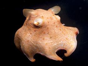 沼津港深海水族館は不思議な生物の宝庫!日本唯一シーラカンスも