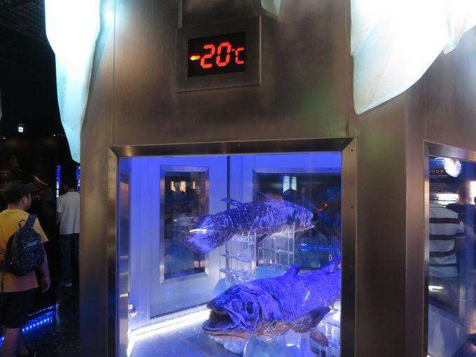 世界にここだけ!冷凍保存のシーラカンス