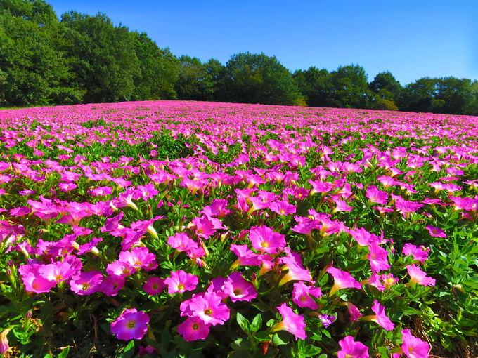 夏は水遊びを楽しもう!季節の美しい花々も