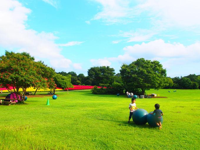 豊富な遊具と芝生の広場