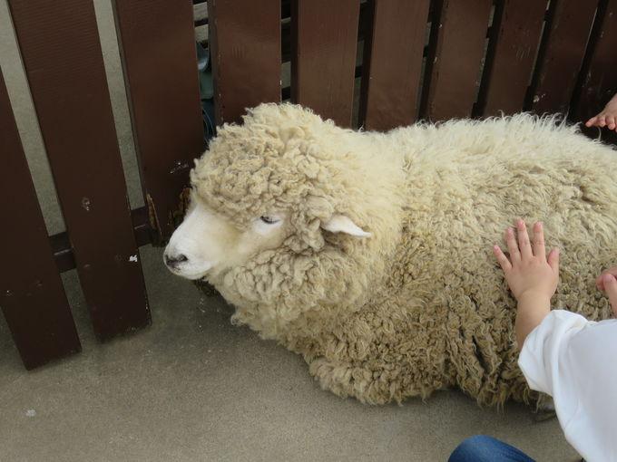 牧場の動物たちとふれあおう