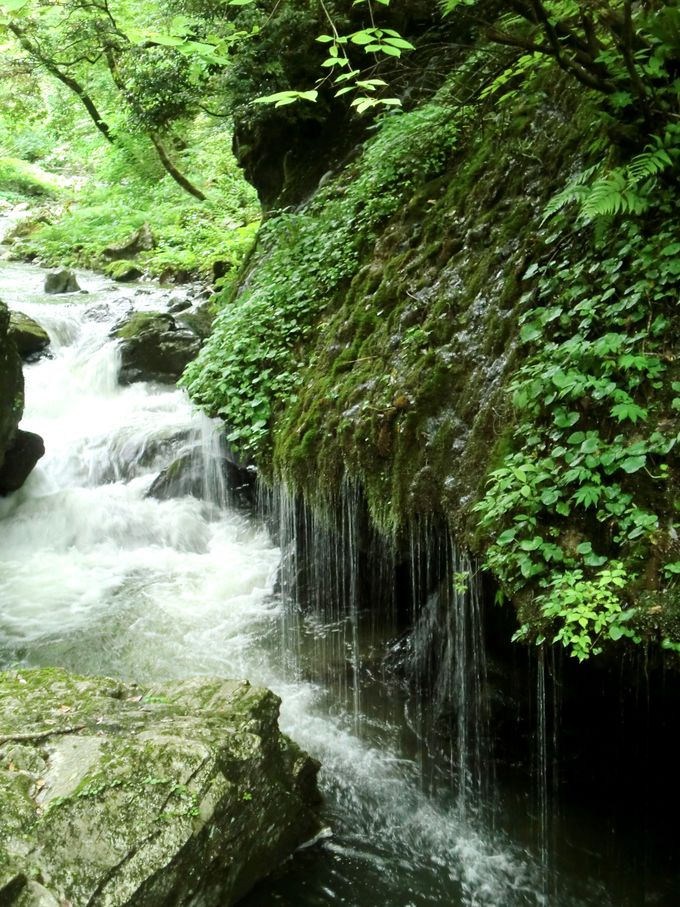 静かに流れる「玉垂の滝」がお出迎え