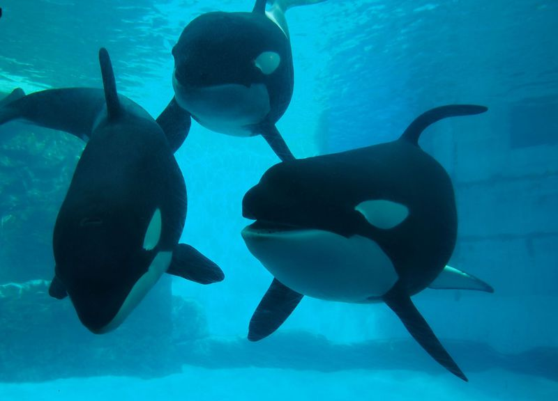 癒されるぅ〜!名古屋港水族館にベビーブーム到来?!とってもカワイイ赤ちゃん達に会いに行こう♪
