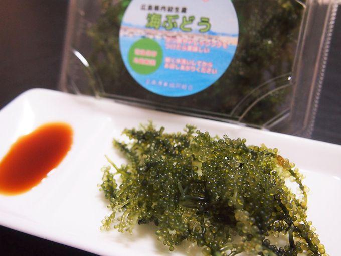 竹原名物のニューフェイス!新鮮な広島産「海ぶどう」