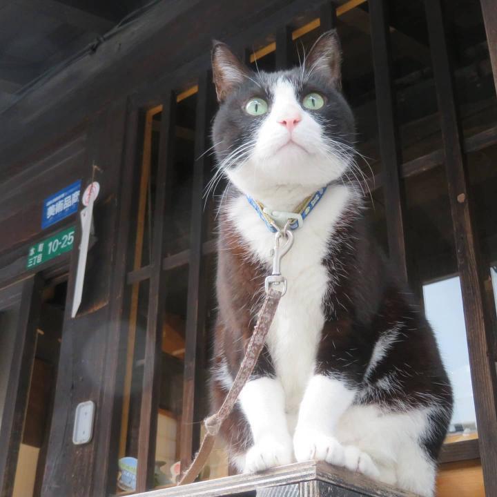 『岩合光昭の世界ネコ歩き』にも登場!人気看板猫・漱石くん