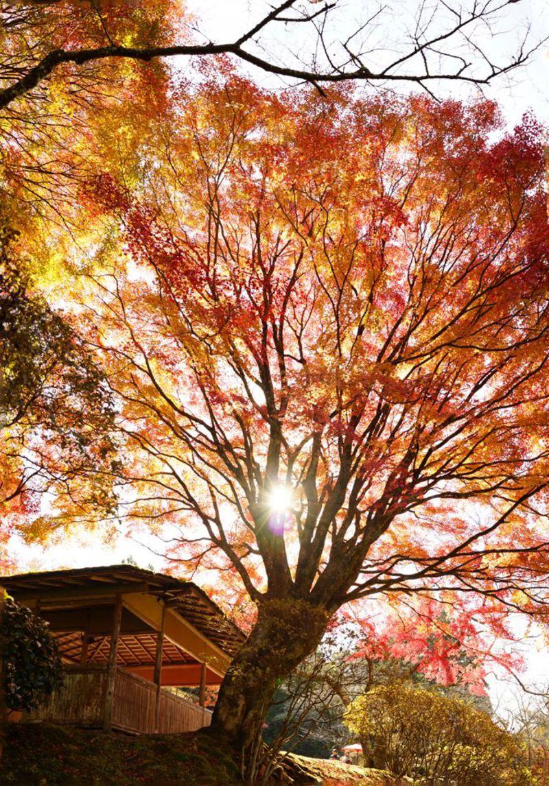 一日100人限定故の極上の日本庭園、京都「白龍園」