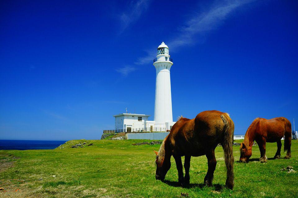 雄大な景色に、寒立馬が和みを添える、癒しの光景