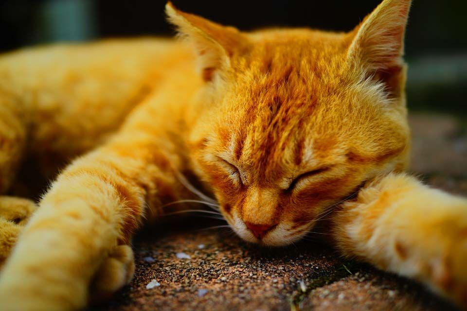 猫島を楽しむ上での注意点