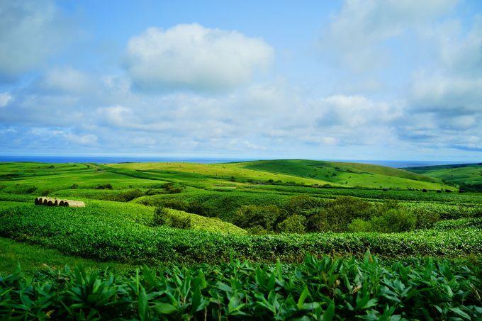 運動しながら絶景を存分に楽しめる「宗谷丘陵フットパス」