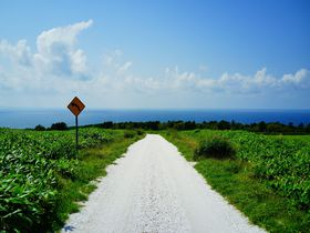 夏の爽やかさを北海道最北端部で楽しむ!稚内「白い貝殻の道」