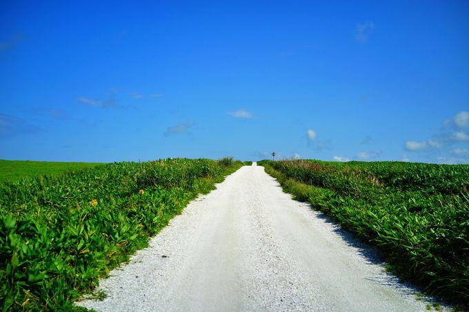どこまでも爽快な光景!白い貝殻の道を歩く