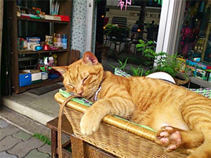 看板猫のわらびちゃんと、店主一流の遊び心がチャーミング!「レトロ京都」