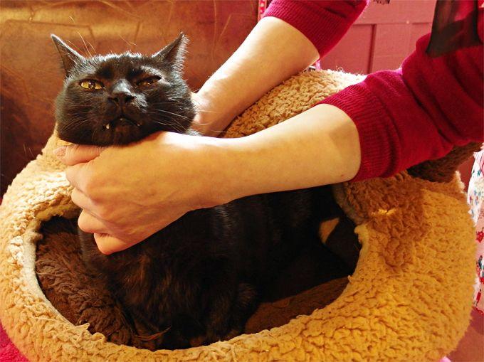 レトロ&アンティーク雑貨と、看板猫のしじみちゃんに会いに行く「ピピネラ・キッチン」