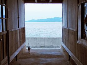 海が目の前!香川県佐柳島「ネコノシマホステル」木造の小学校に宿泊しよう
