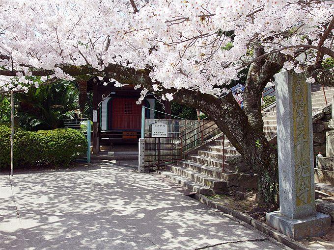 「千光寺」の桜爛漫スポットと、絶景桜写真スポット!