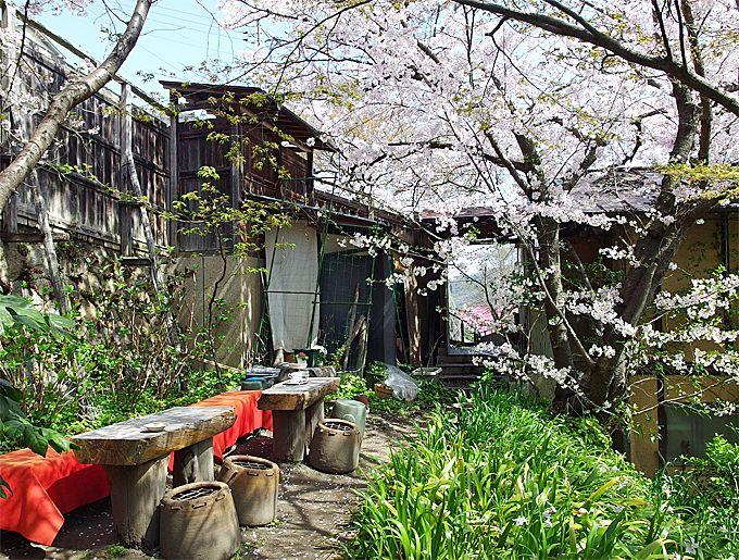 桜舞う古民家の庭で、至福のひととき!「帆雨亭」