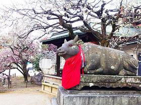 """京都「北野天満宮」歴史と霊験、御利益溢れる""""要""""の神域とは!?"""