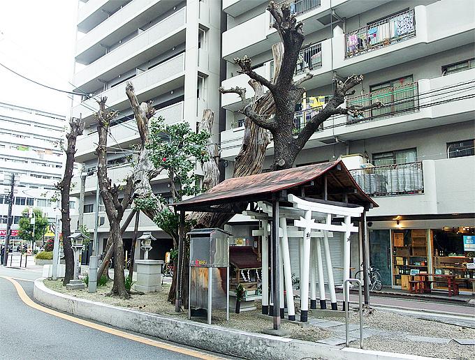 谷町界隈には更に伐採タブーの御神木が「楠木大神」