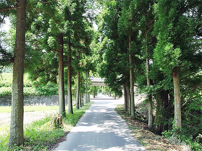 一の鳥居から歩くのがお勧め!古の面影残す並木の参道