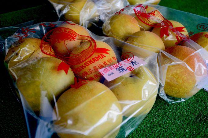 浜なし解禁!「長谷川果樹園」の夏の風物詩が始まる