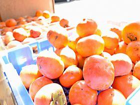 浜なし浜ぶどう浜柿..横浜ブランド5つの果物を長谷川果樹園で味わう