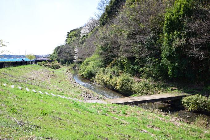 水と緑を楽しむウォーキングコース「和泉川健康のみち」