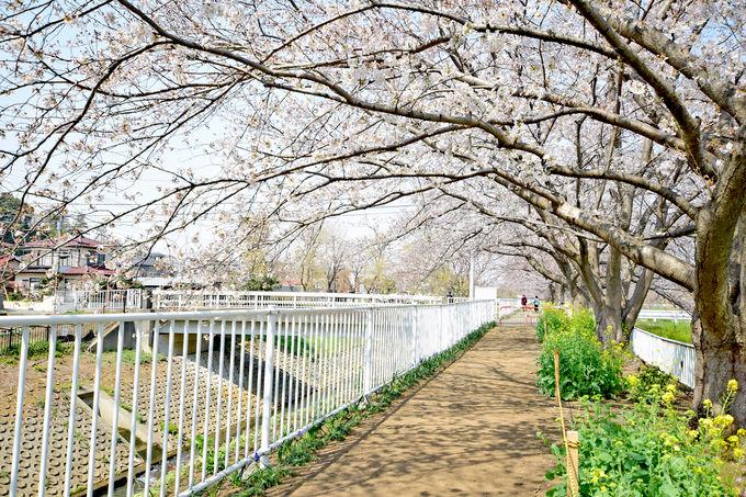 横浜の原風景を残す「せせらぎルート」