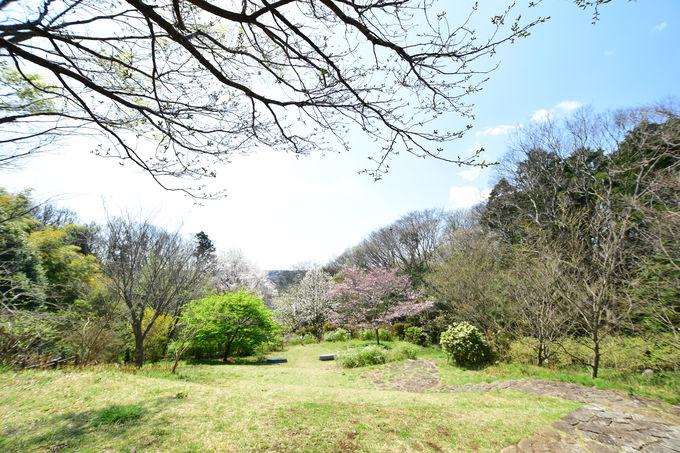 水辺と公園が点在する「森と花ルート」
