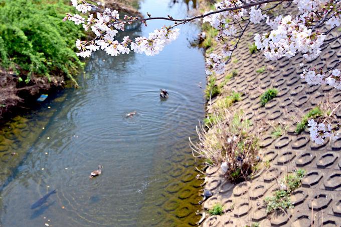 貴重な横浜の里山が残る自然豊かなまち泉区