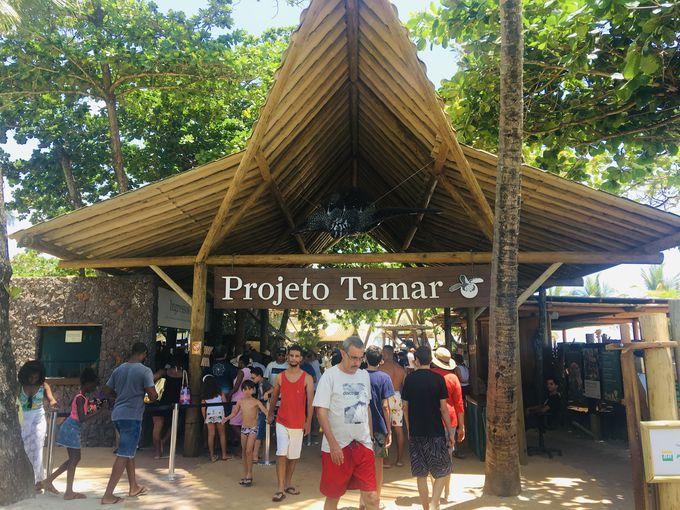 ウミガメ保護施設「PROJETO TAMAR」