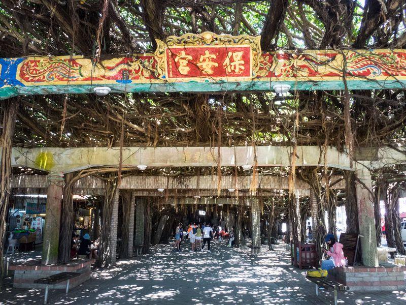 台湾澎湖の「通梁保安宮」を守る奇跡の巨樹ガジュマル