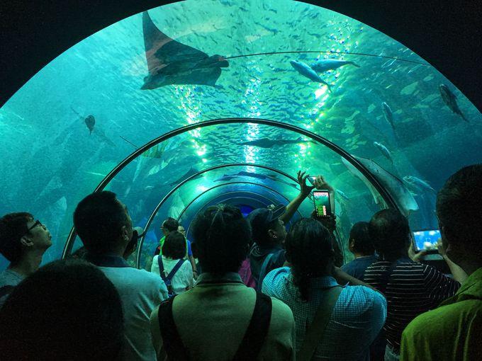 澎湖ならではの展示方法で、澎湖近海の生物に会える!