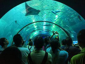 澎湖水族館で台湾の離島「澎湖」の海を楽しもう