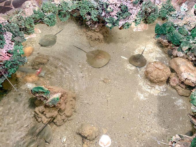 日本では天然記念物になっている生きた化石まで!?