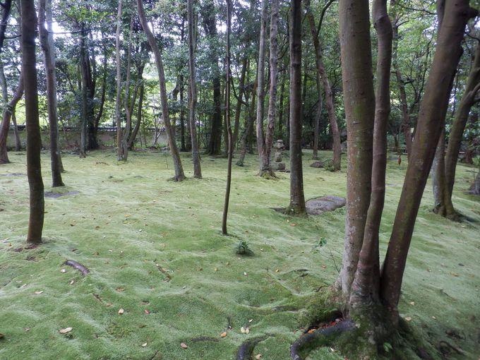 青々とした苔によって埋め尽くされた金堂跡